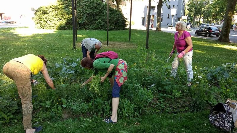 001 Erste Ernte Urban Gardening-IMG_20170619_190601440