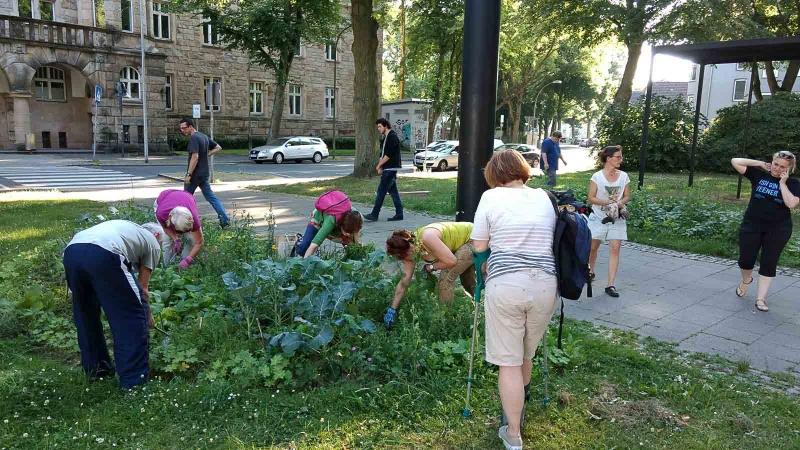 002 Erste Ernte Urban Gardening-IMG_20170619_190613643