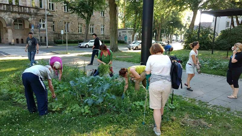 003 Erste Ernte Urban Gardening-IMG_20170619_190615433_BURST000_COVER