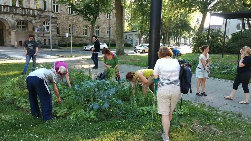 005 Erste Ernte Urban Gardening-IMG_20170619_190615433_BURST002