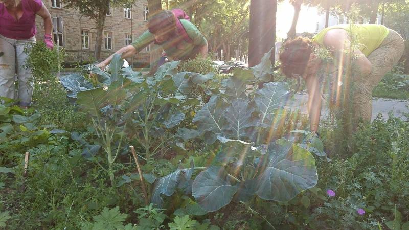 006 Erste Ernte Urban Gardening-IMG_20170619_190623581