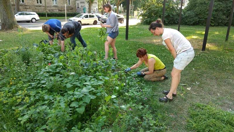 012 Erste Ernte Urban Gardening-IMG_20170619_191731736