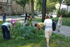 004 Erste Ernte Urban Gardening-IMG_20170619_190615433_BURST001