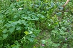 013 Erste Ernte Urban Gardening-IMG_20170619_191737500