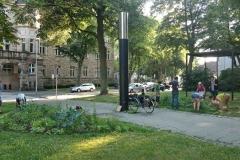 016 Erste Ernte Urban Gardening-IMG_20170619_193800312