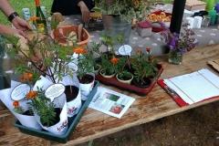 004 Urban Garden Party-IMG_20170702_113852928_BURST001